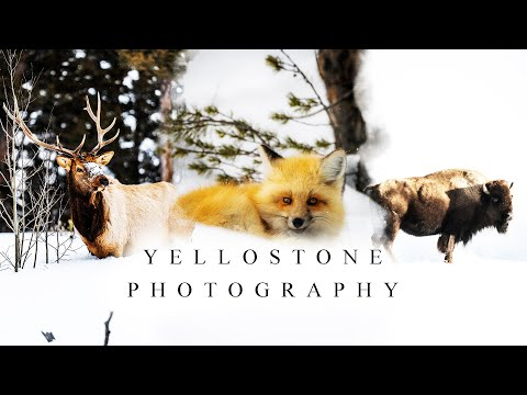 WINTER PHOTOGRAPHY IN YELLOWSTONE 2020 | Fishcamp Creative | Yellowstone National Park