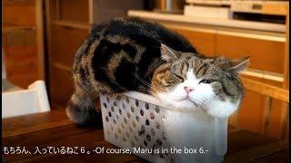 もちろん、入っているねこ6。-Of course, Maru is in the box 6.-