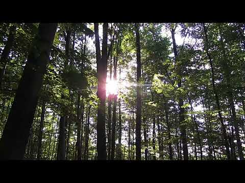 BACKGROUND VIDEO FREE HD Forest 6405