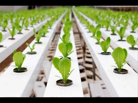 como hacer un sistema de cultivo hidroponico en casa