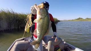 Largemouth bass fishing by CHRBASS @ Cibola Lake 08/22/15