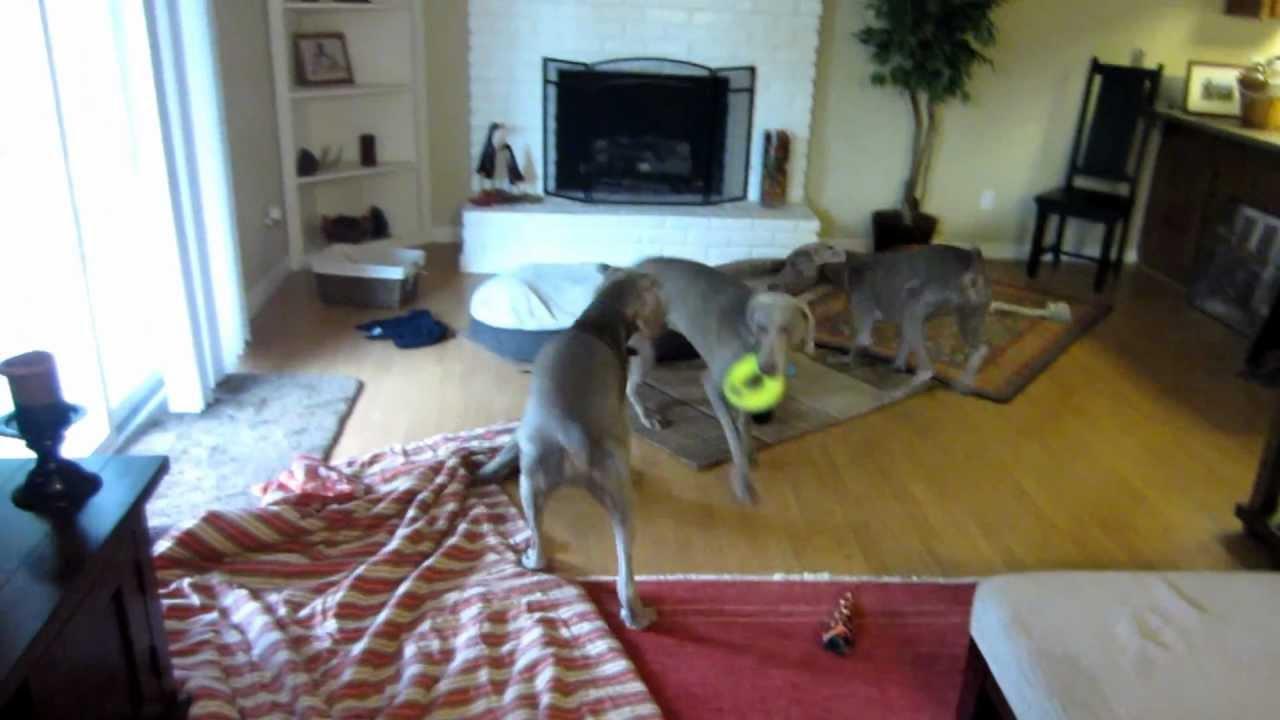 Dog Boarding Sacramento Ca