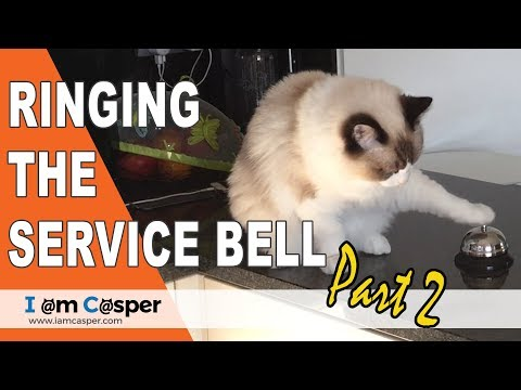 Ragdoll Cat Binx Ringing the Service Bell for treats - Part Two