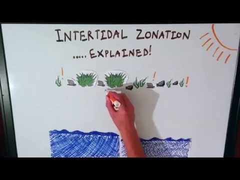 Intertidal Zonation Explained