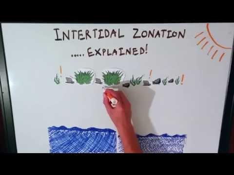Intertidal Zonation Explained