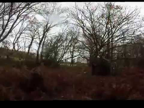 Chasse 29/11/2015 Faisans Pigeon Bécasse Woodcock Hunting Pheasant Pigeon