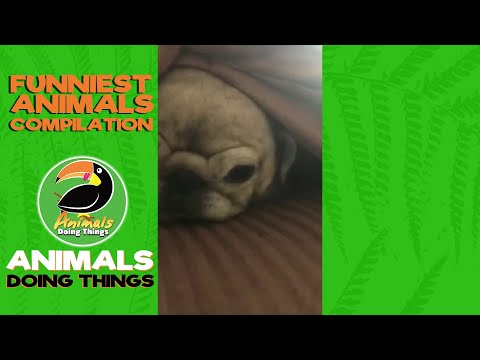 Cute Little Dogs Vol. 1 - Funny Dog Compilation