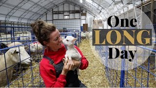 A Day in the Life of a Sheep Farmer (A DAY OF LAMBING!): Vlog 162