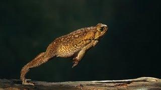 #575. Лягушки (В мире животных)