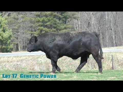 Lot 17  Genetic Power