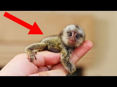 SMALLEST Animals In The World!