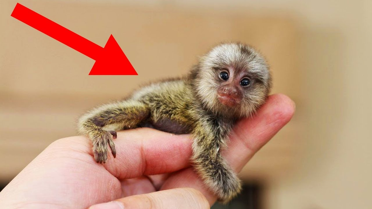 Video Images & Artcles: 10 OF THE WORLD'S SMALLEST ANIMALS |The Shortest Animal Ever