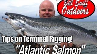 Huge Atlantic Salmon - Tips on Terminal Tackle! Capt. Bill Saiff III