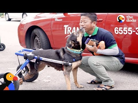 Paralyzed Dog Reunited With Man Who Never Gave Up on Her | The Dodo