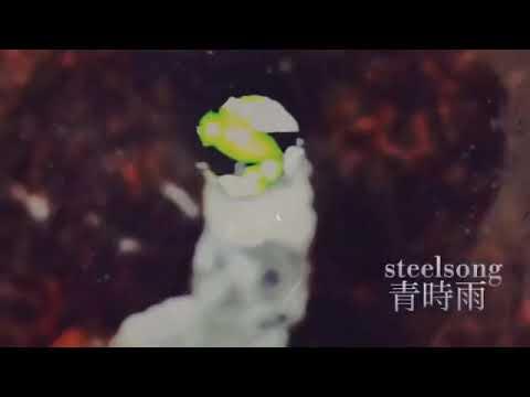 青時雨/ steel song
