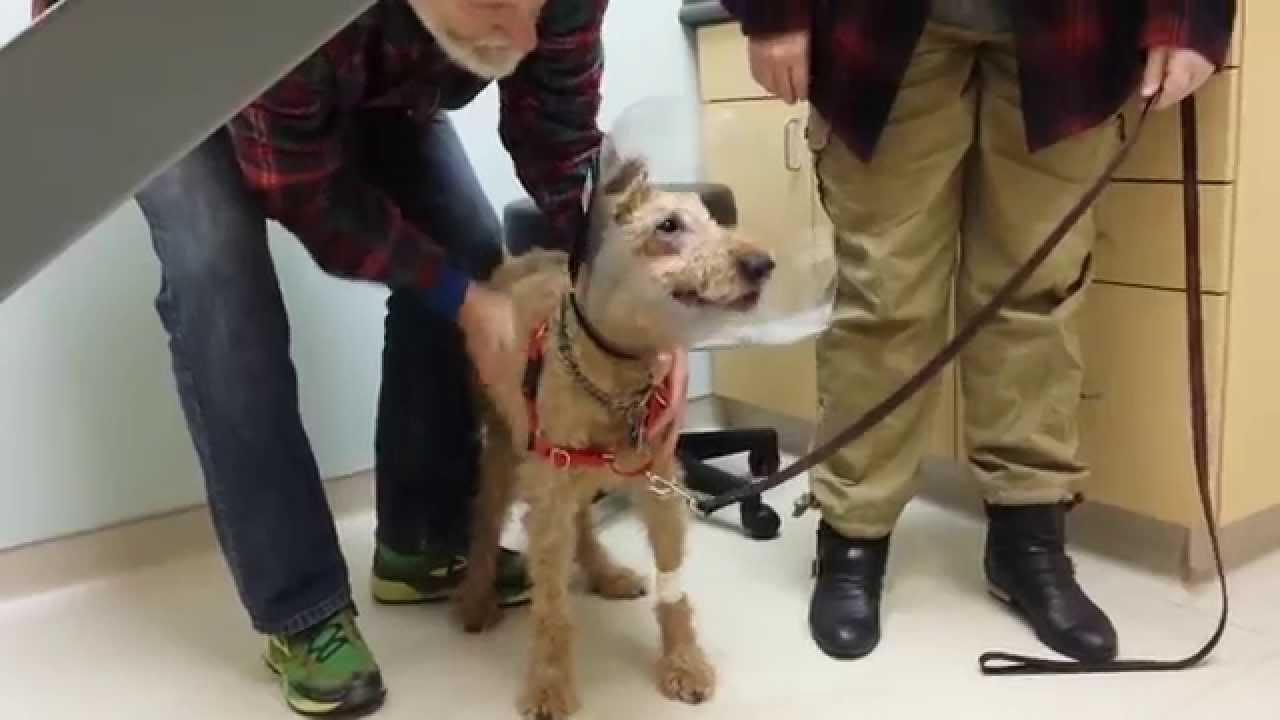 Image result for Formerly blind dog Duffy seeing the family after surgery
