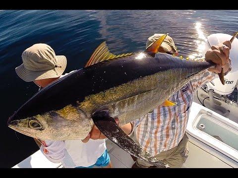 Yellowfin Madness, Jigging Tuna On Long Island, New York