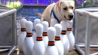 Especial Perros  Programa 01/01/16