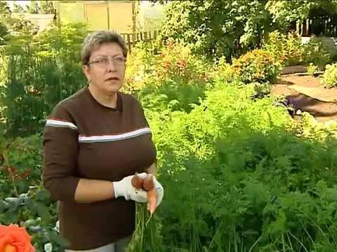 Дачные советы от Людмилы Ергаевой: боремся с морковной мухой
