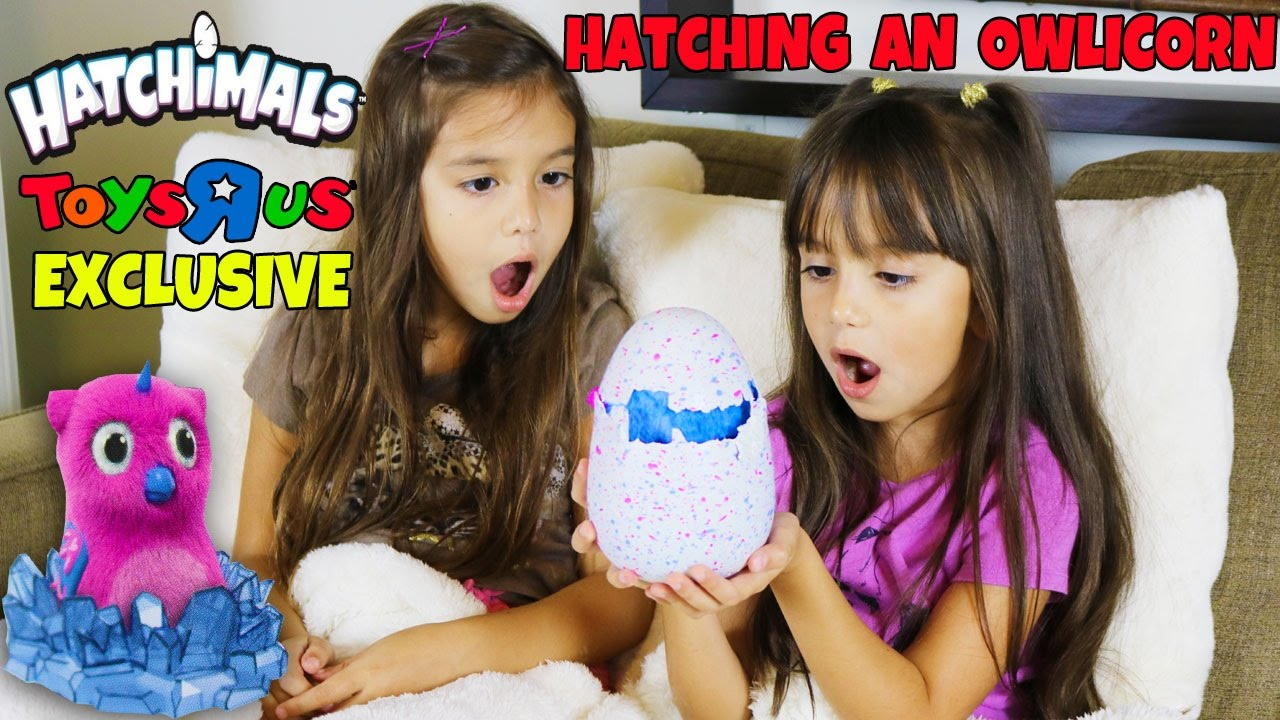 Hatchimals Hatching An Owlicorn New Toys R Us Exclusive Hatchimal