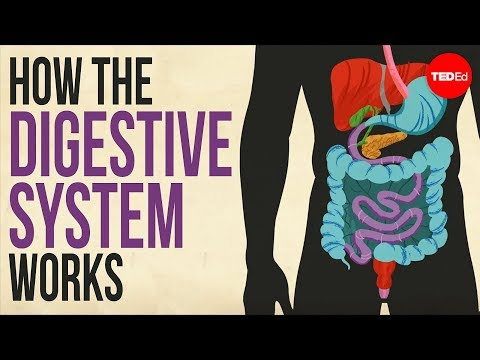 How your digestive system works – Emma Bryce