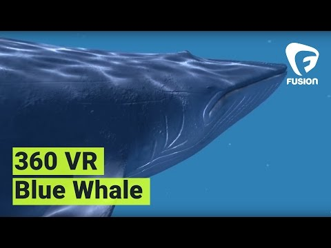 Blue Whale 360 VR Experience