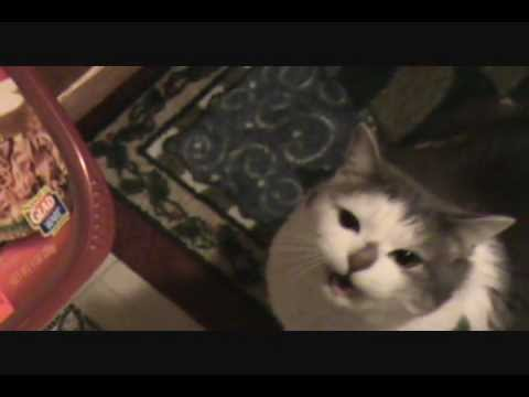 Home videos: My smart cat Dodie (RIP)