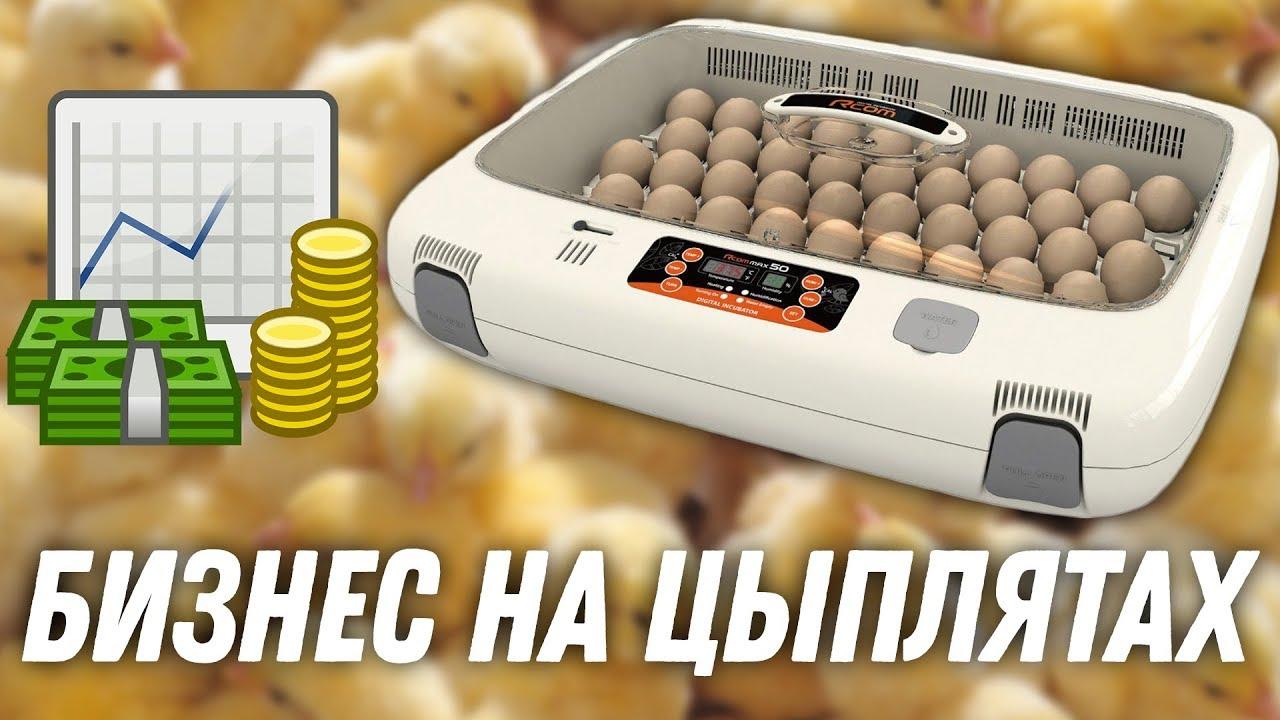 Бизнес идея инкубатор для яиц бизнес идея соки