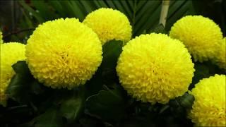 NHK朝ドラ『ひよっこ』の主題歌がKyoto Piano Ensembleの洗練された高音...