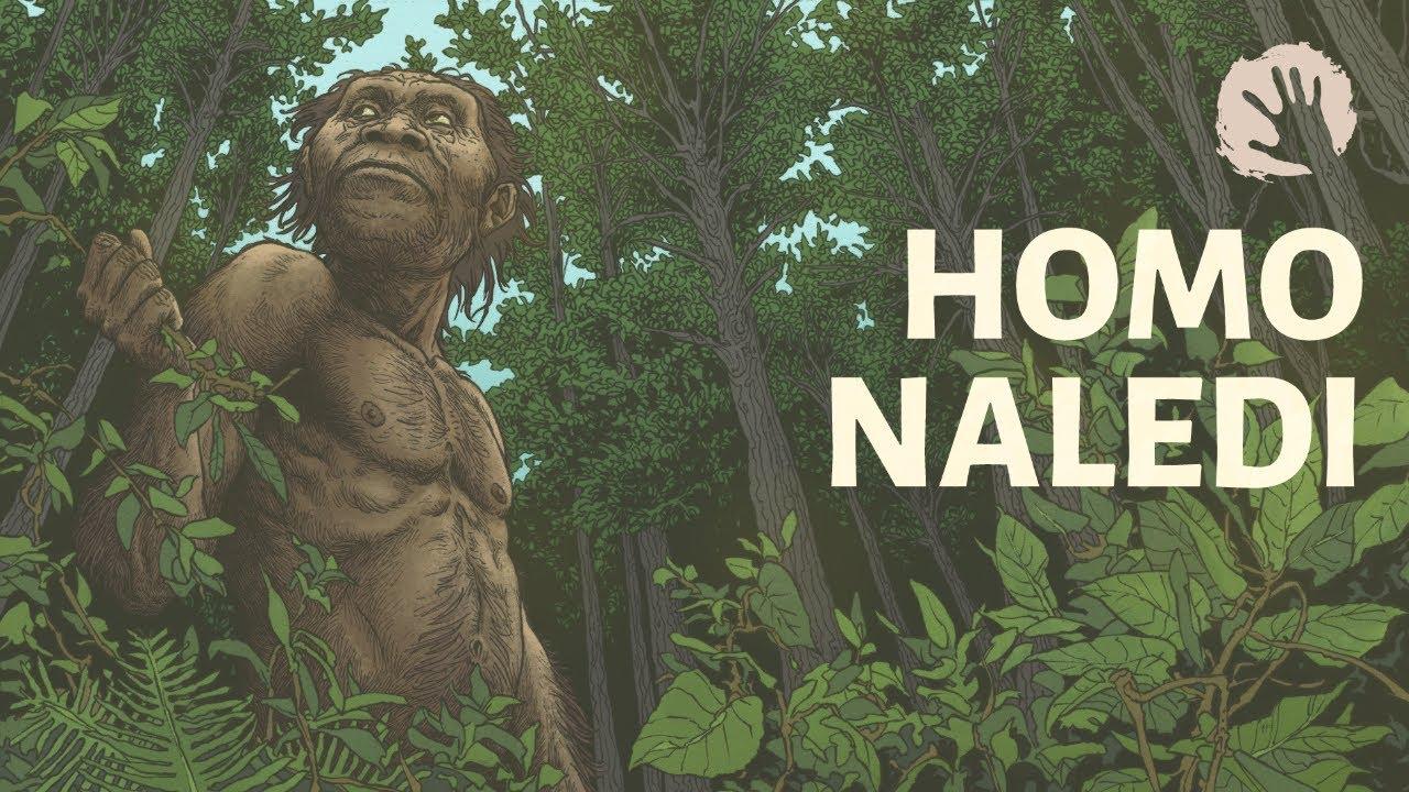 Homo Naledi - Human Evolution