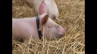 Fun Farm Animal Facts for Children