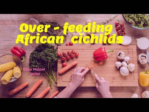 Why overfeeding any fish is bad youtube for Why fish is bad for you