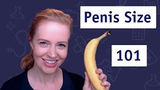 Normal Range for Penis Size 🍌