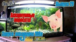 аквариум 100 л с золотыми рыбками