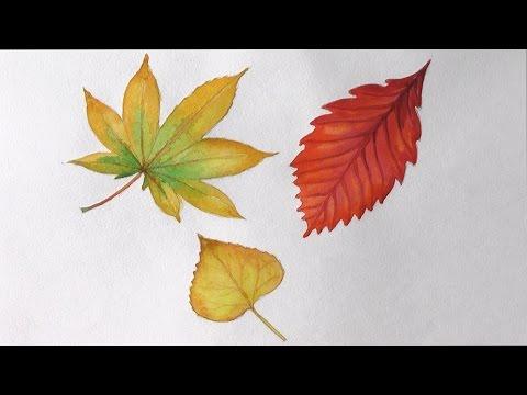 Как нарисовать листочек осенний