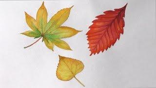 Уроки рисования. Как нарисовать осенние листья деревьев акварелью !