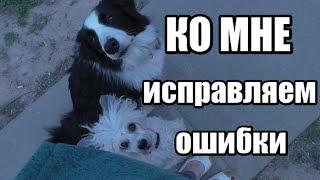 Почему собака не выполняет команду КО МНЕ - 5 основных ошибок - Дрессировка собак