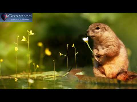 Happiness Frequency: Serotonin, Dopamine and Endophin Release Music, Relaxing Binaural Beats