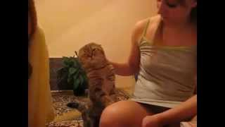 Hot girl pets her pussy cat, this pussy cat demands petting!
