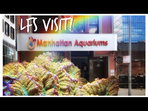 We Visit Manhattan Aquariums, New York