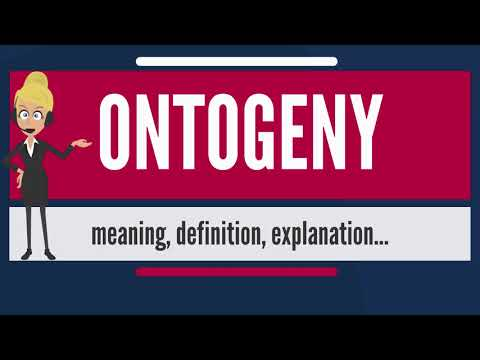 What is ONTOGENY? What does ONTOGENY mean? ONTOGENY meaning, definition & explanation