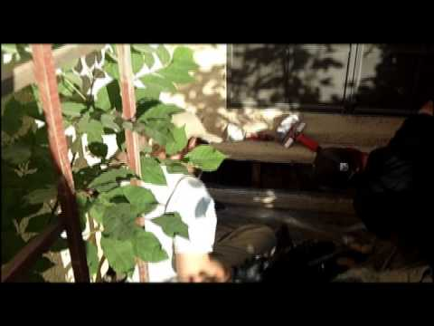 BEE Removal - Arizona Africanized Bees