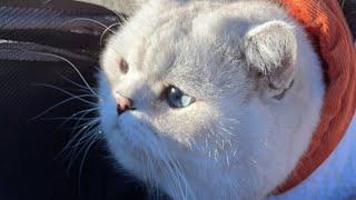 cat, kittens, meow