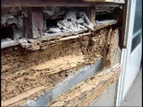Termite Damage In Homes How To Get Rid Of Termite How To