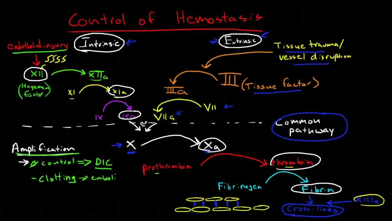 physiologic control of hemostasis