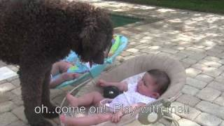 Dog wants to play fetch with identical twin babies!