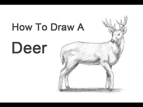 How To Draw A White Tailed Deer Video Step By Step Pictures