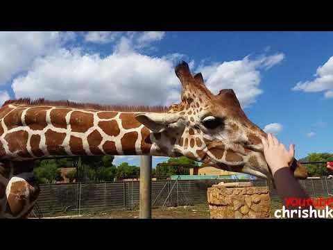 Safari Zoo, Sa Coma Majorca (Mallorca)