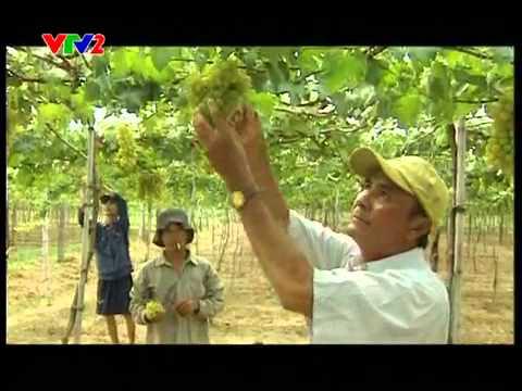 Dalat Wine LADOFOODS