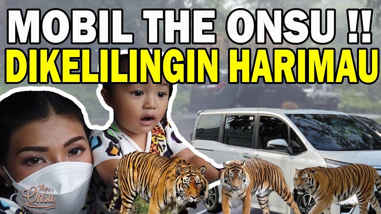 The Onsu Family - Thalia dan Thania keliling taman safari berkenalan dengan semua hewan!